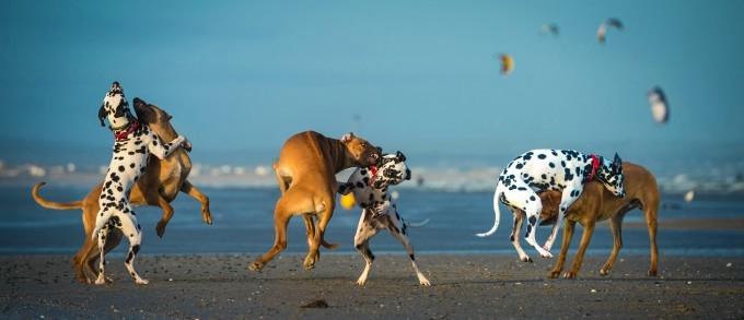 прикольные фото собак 6 (680x293, 87Kb)
