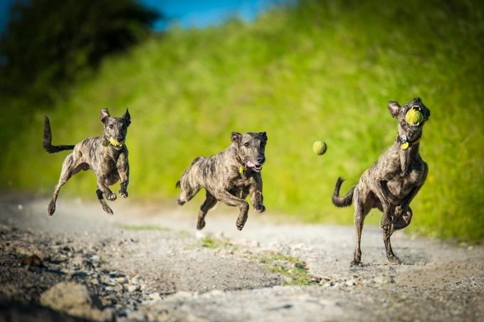 прикольные фото собак 8 (680x452, 136Kb)