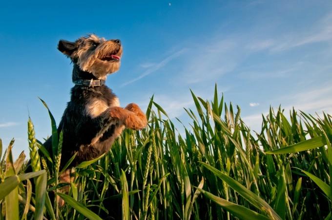 прикольные фото собак 10 (680x450, 176Kb)