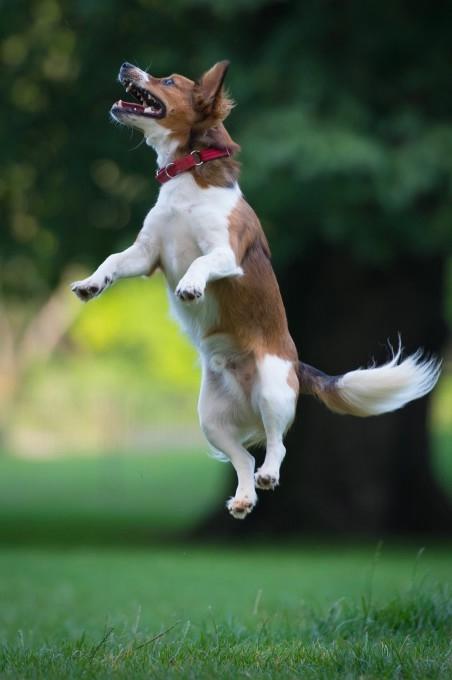 прикольные фото собак 12 (452x680, 90Kb)
