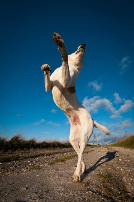 прикольные фото собак 15 (451x680, 141Kb)