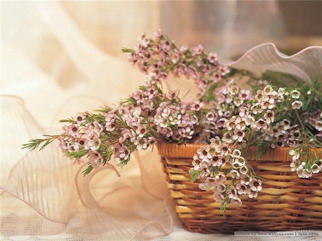 цветы и корзина 2 (640x480, 264Kb)