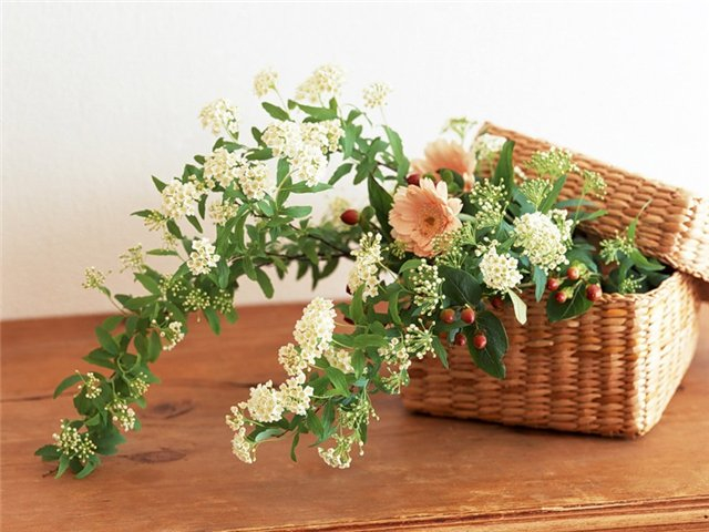 цветы и корзина 13 (640x480, 253Kb)