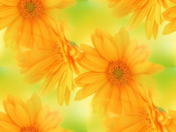1310448462_1310393182_international_womens_day_yellow_flowers_in_your_favorite_gift_014480_ (700x525, 288Kb)