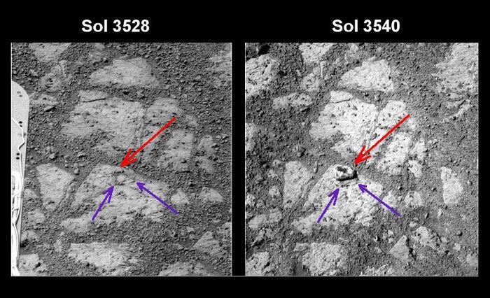 Новости с Марса: движущийся камень или каменный цветок?