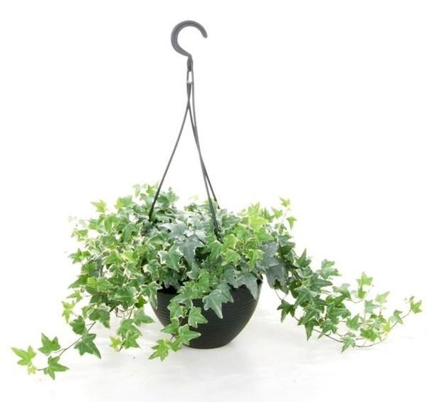 растения (500x465, 96Kb)