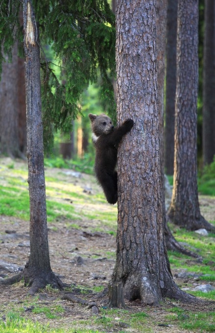 медвежата фото 9 (439x680, 249Kb)