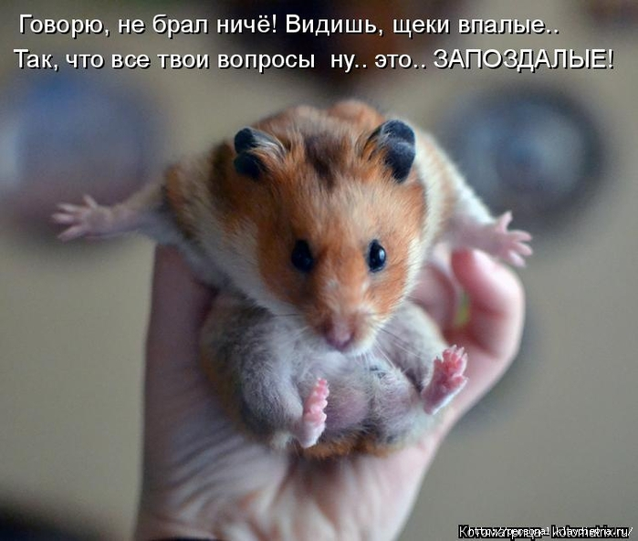 kotomatritsa_1 (700x593, 223Kb)