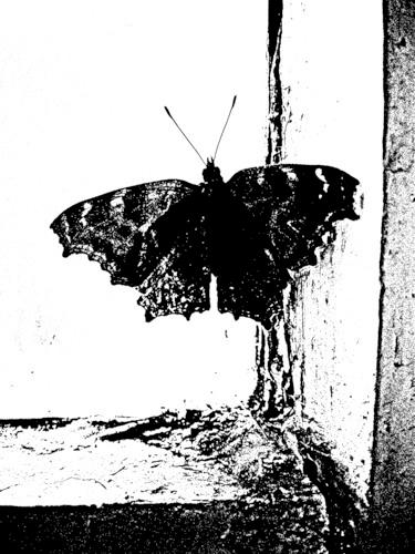 batterfly (1) (375x500, 123Kb)