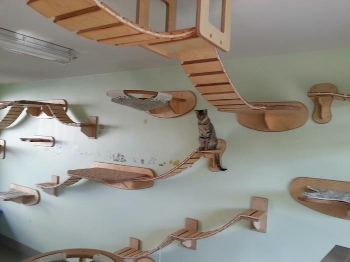 Домики для кошки в чите авито - a817