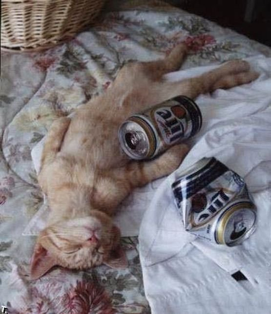 6ea0f960c490_016_cats_beer_25 (555x643, 58Kb)