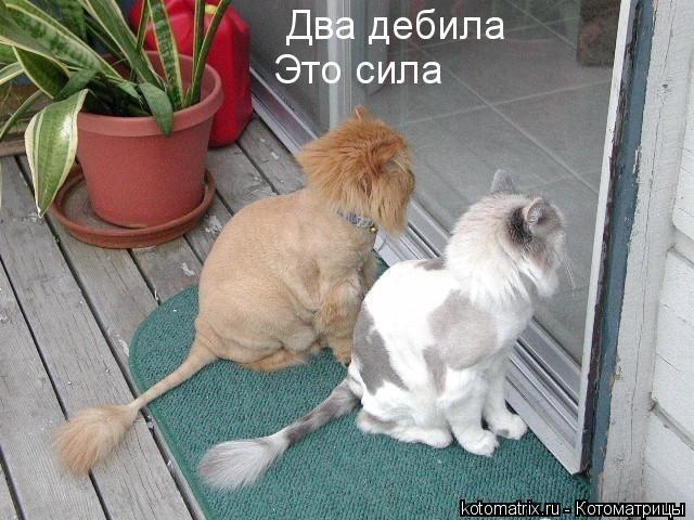 kotomatrix_03 (640x480, 62Kb)