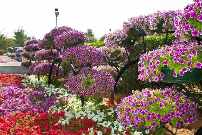 Райский сад Аль-Айн1 (700x467, 296Kb)
