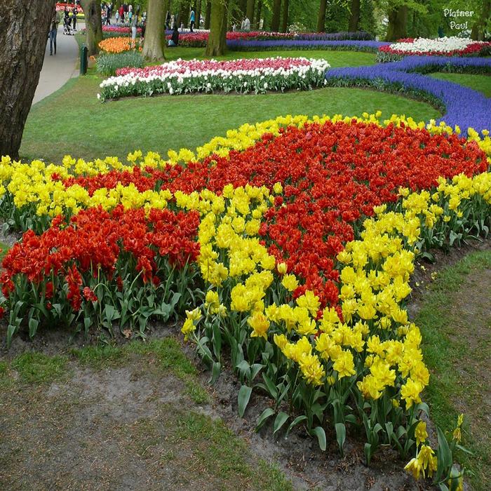 тюльпаны фото 1 (700x700, 806Kb)