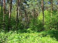 лес (200x150, 41Kb)