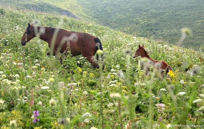 Ах, вы кони, удивительные кони! Лошадиный рай!