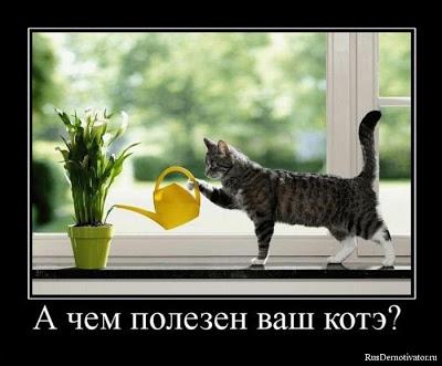 кошачьи способности (400x331, 33Kb)