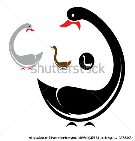 stock-vector-vector-image-of-swans-on-white-background-129198971 (450x470, 55Kb)