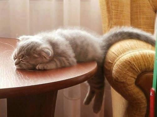 кошка ночь котенок