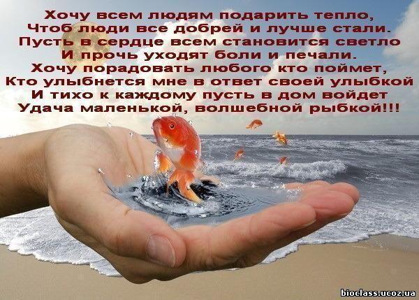 4646985_rybka_zolotaja (600x429, 64Kb)