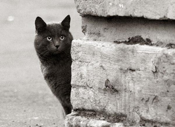 чёрный кот1 (600x437, 167Kb)