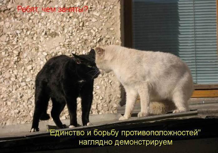 �������� � ������ ������������������/4202458_Borba_protivopolojnostei (700x491, 53Kb)