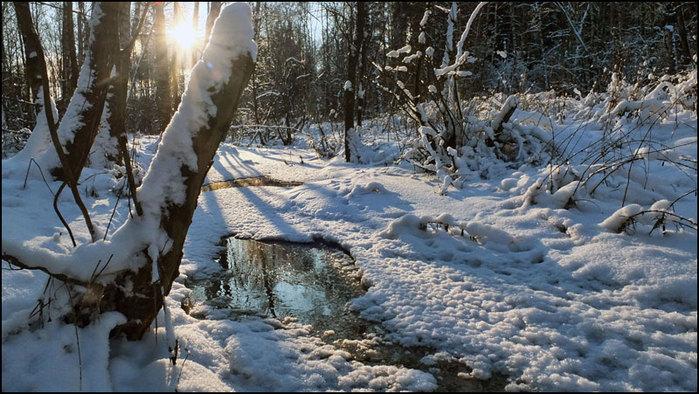 Лесной ручей зимой