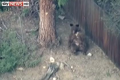 Медведь на пороге дома в Шотландии (420x280, 64Kb)