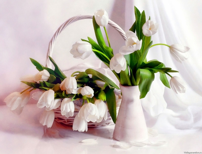 белые цветы2 (700x533, 215Kb)
