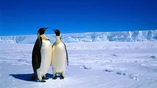 Антарктида (500x280, 34Kb)