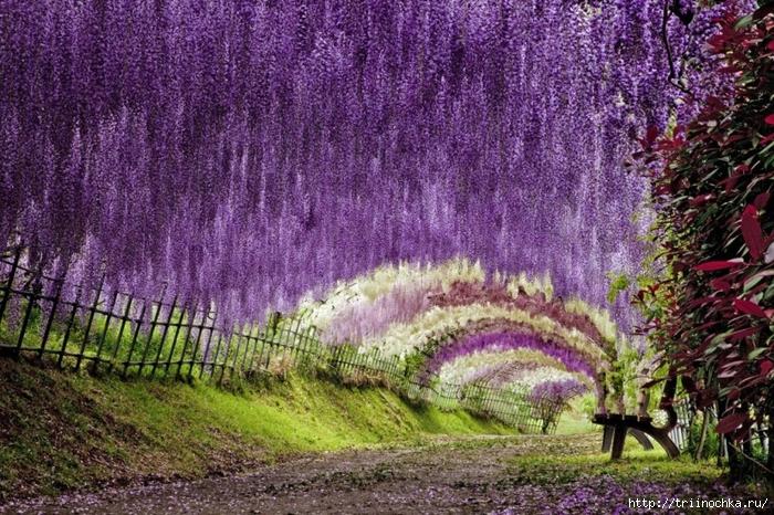 Сады Японии