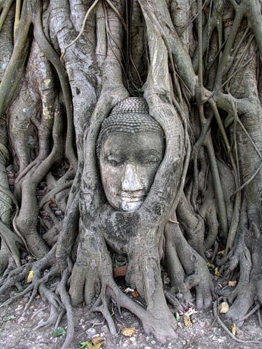 дерево корни (375x500, 190Kb)