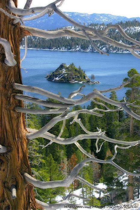 дерево3 (466x699, 346Kb)