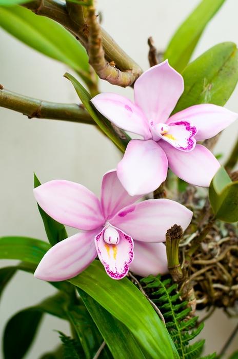 Orquídea de masilla de azúcar para pastel de chocolate con crema de coco (9) (464x700, 216KB)