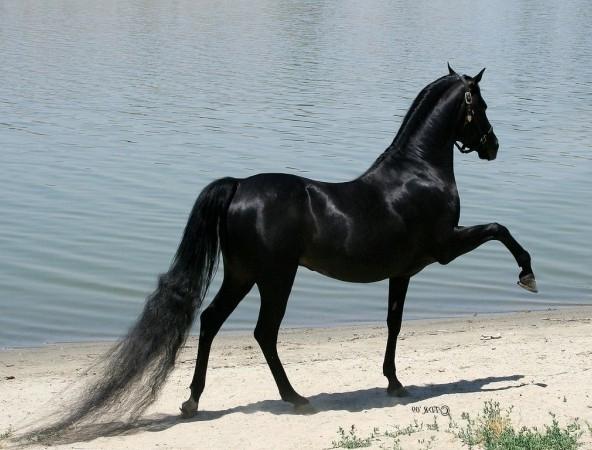 конь класс (592x450, 162Kb)