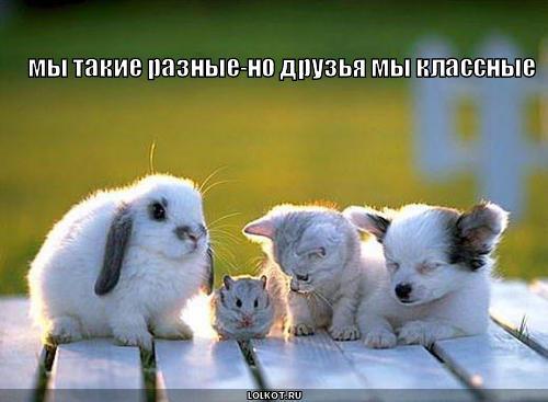 my-takiye-raznyye_1278832411 (500x367, 27Kb)