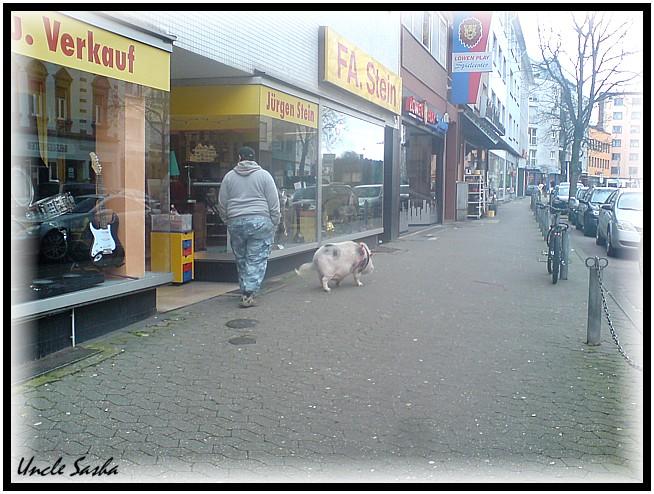 Schwein2 (654x494, 116Kb)