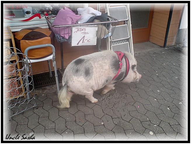 Schwein4 (654x494, 116Kb)