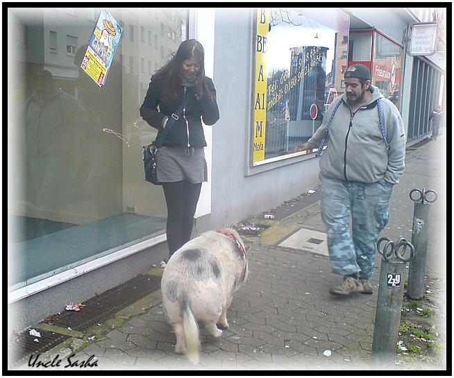 Schwein6 (654x545, 112Kb)