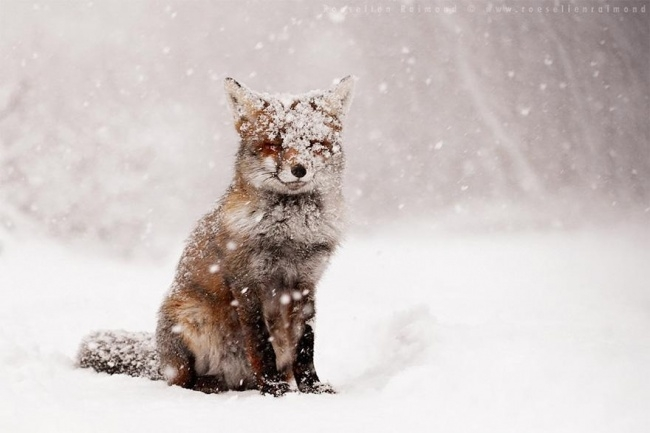 3252155-R3L8T8D-650-animals-in-winter-5 (650x433, 118Kb)