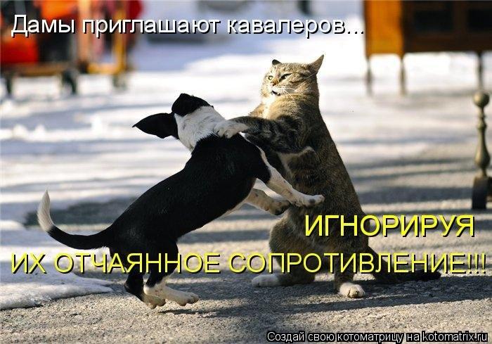 1388865345_kotomatricy-novye-16 (700x489, 227Kb)
