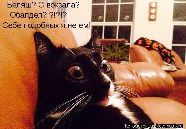 1388865349_kotomatricy-novye-15 (640x446, 173Kb)