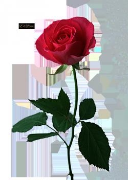 4146972-thumb (250x352, 122Kb)