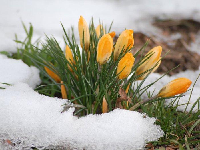 Где зима встречается с весной 3096_1 (700x525, 67Kb)