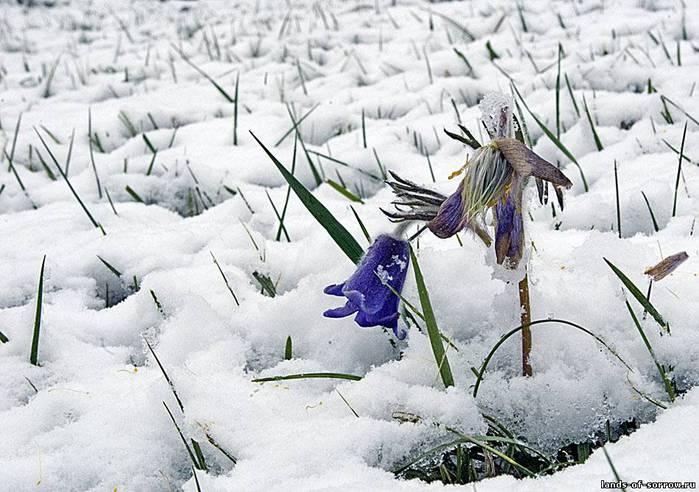Где зима встречается с весной 53994 (700x492, 65Kb)