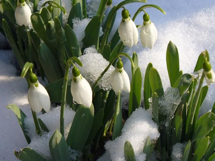 Где зима встречается с весной 1304587285_1302415108_132555_1600_1200 (700x525, 141Kb)