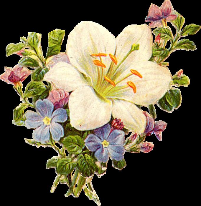 Винтажные+цветы_картинки+для+декупажа_16 (682x700, 570Kb)