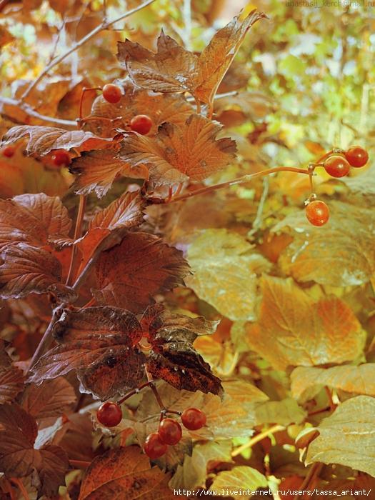 autumn_berries_by_izaballaantern-d6u0fv5 (525x700, 356Kb)