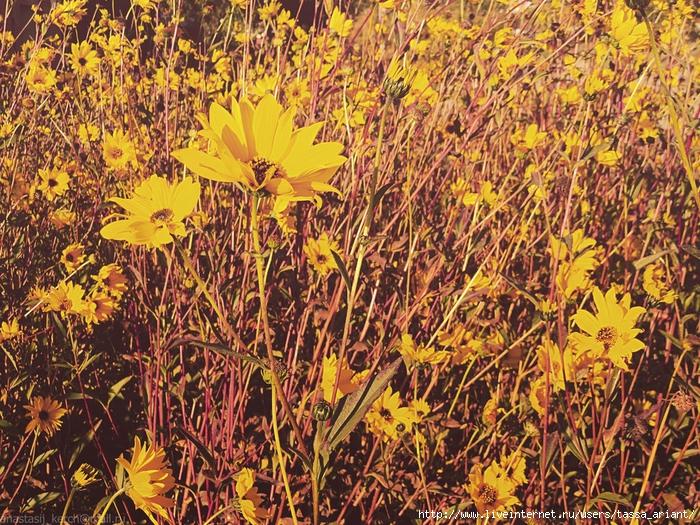 autumnal_colors_by_izaballaantern-d6u0j98 (700x525, 517Kb)