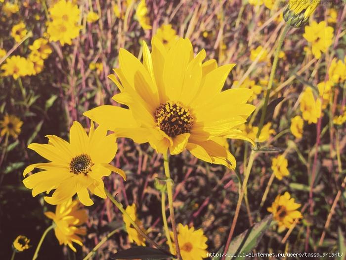 autumnal_shades_by_izaballaantern-d6u0jfz (700x525, 313Kb)